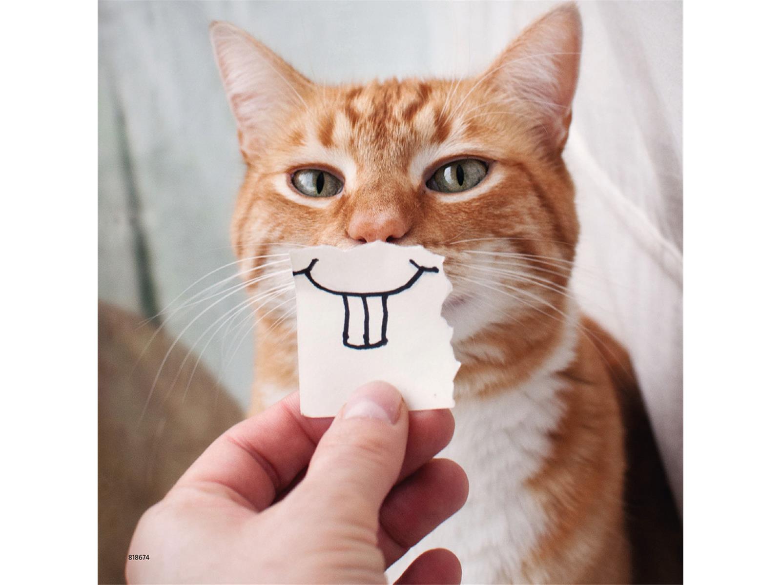 Witzige Tierportraits